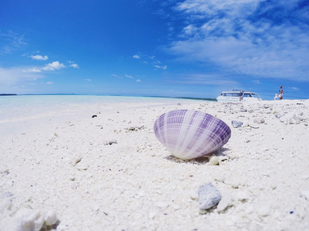 Purple seashell on One Foot Islands Beach in Aitutaki Cook Islands