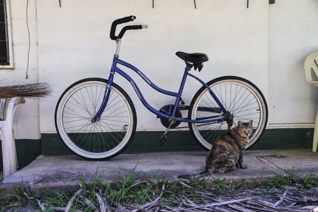 Cat in front of bicycle in Aitutaki, Cook Islands