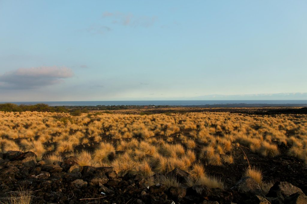 Lava fields on the Big Island, Which Hawaiian Island? Big Island