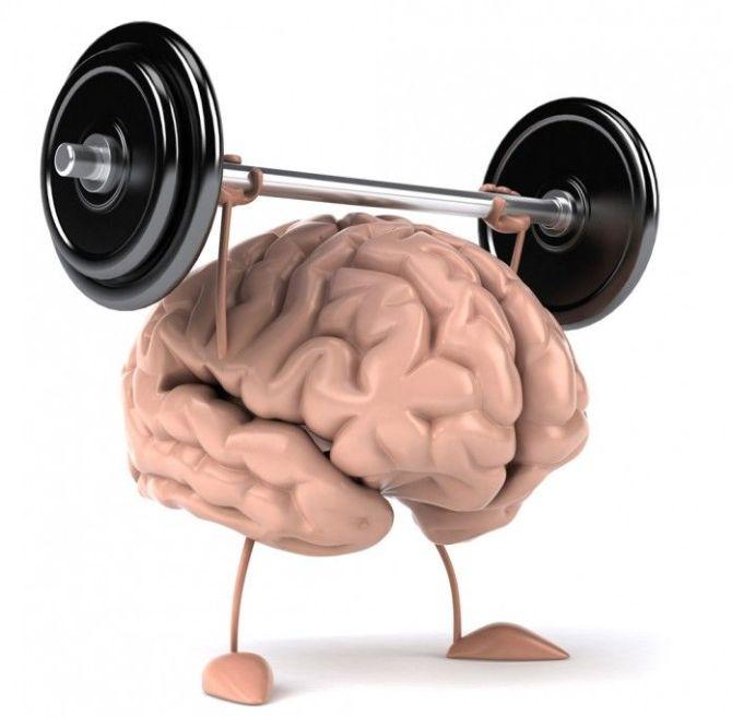 brain050-696x683_result