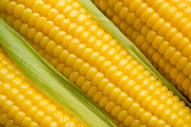 corn21_result