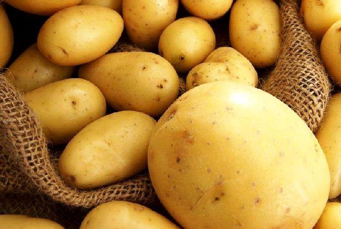 potato_1_result