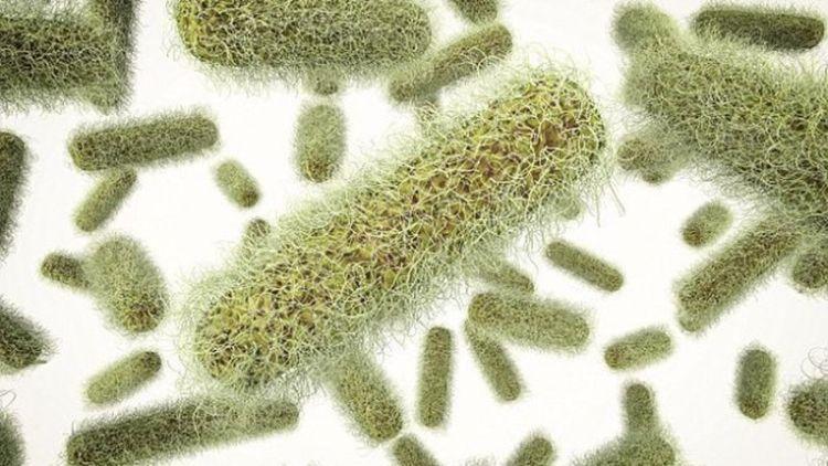 Бактерии Salmonella, которые обычно вызывают пищевое отравление, могут быть использованы для уничтожения рака