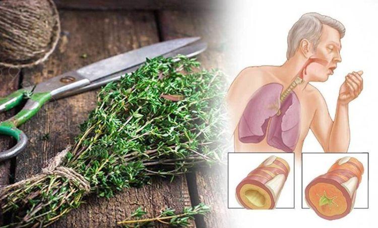 7 растений, которые убивают вирусы и очищают легкие от слизи