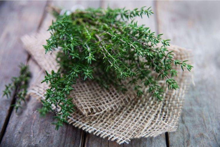 Трава, с которой наши предки изгоняли злых духов: целебный чай из чабреца для тех, кому за 40