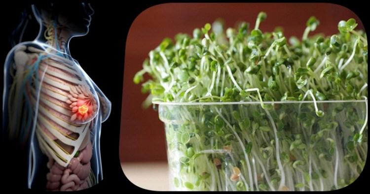Истинная сила брокколи в его ростках: проращиваем и справляемся с раком