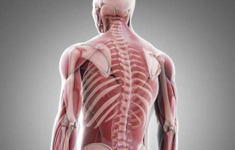 Все дело в капиллярах: ученые выяснили, как задержать старение мышц человека с возрастом