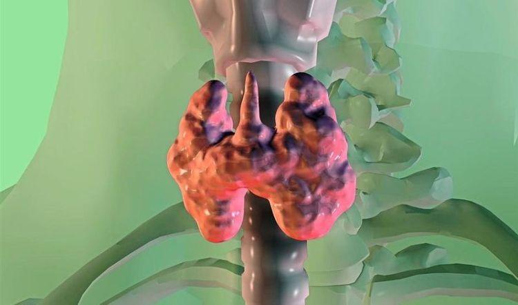 Когда щитовидка нуждается в скорой помощи: первые симптомы болезни, которые важно не упустить
