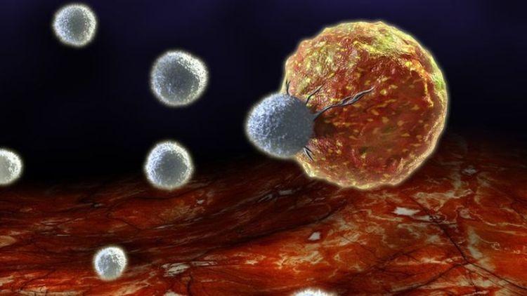 Новый способ излечения от рака, основанный на принципе поедания больными клетками самих себя