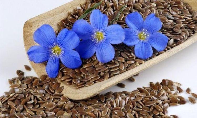 Полезные свойства льняного семени для женщин старше 35