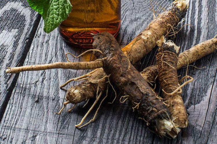 Чай из корня лопуха: под нашими ногами целое богатство для очистки крови, кожи и лимфы
