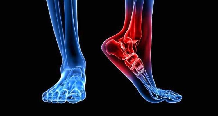 За лишний вес ответственны кости конечностей: учеными обнаружена новая регулятивная система веса