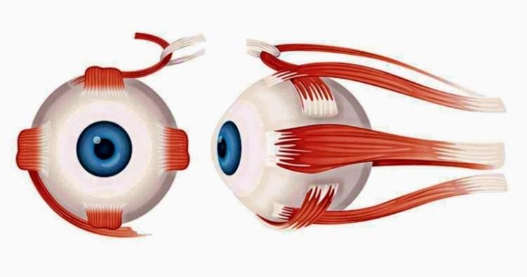 Пряная нетрадиционная медицина придет на помощь в лечении глазных заболеваний