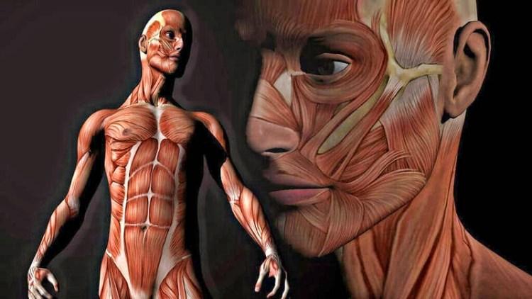 Удивительные факты о внутренних органах человеческого тела