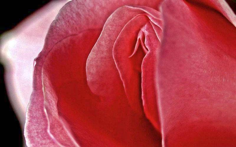 Женское вагина фото раком порно