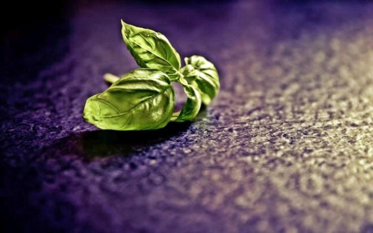 Священное растение базилик: незаменим в очистке ауры и укреплении иммунной системы