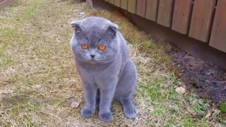 Питомцы тоже могут обижаться и ругаться: забавный диалог кота с хозяйкой