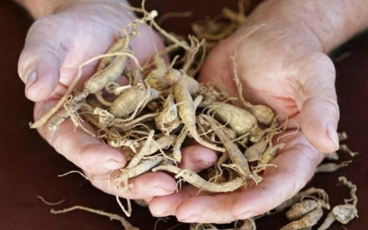 Пырей, одуванчик и лопух: рецепт чудодействующего отвара от известного фитотерапевта