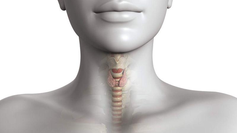 Щитовидная железа играет важную роль в функционировании организма человека. Поэтому здоровая щитовидка является залогом общего здоровья. Однако употребление некоторых вредных продуктов может нарушить работу этого органа и спровоцировать заболевания щитовидной железы.