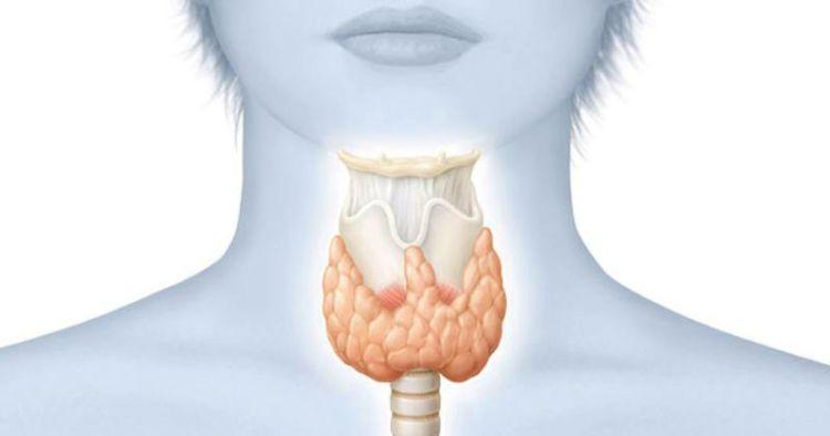 18 признаков заболевания щитовидной железы: как узнать, что ваша щитовидка на пределе или слишком ленива