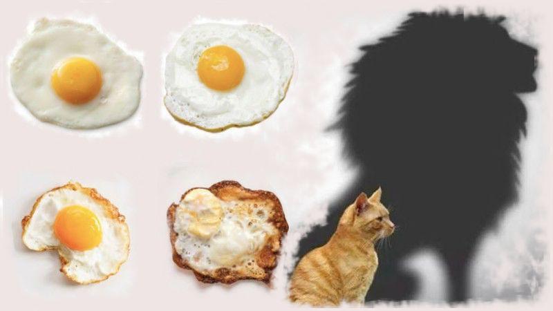 Тест укажет на лучшие черты характера: достаточно указать, как вы любите жарить яйца