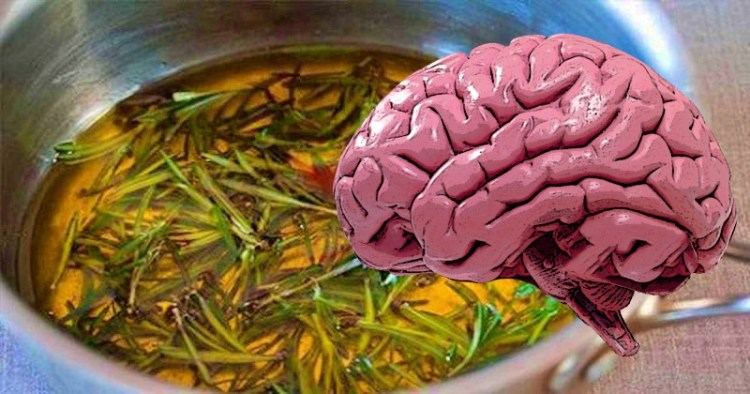 Понюхать розмарин и улучшить память на 75%: 15 продуктов питания для мозга и зрения