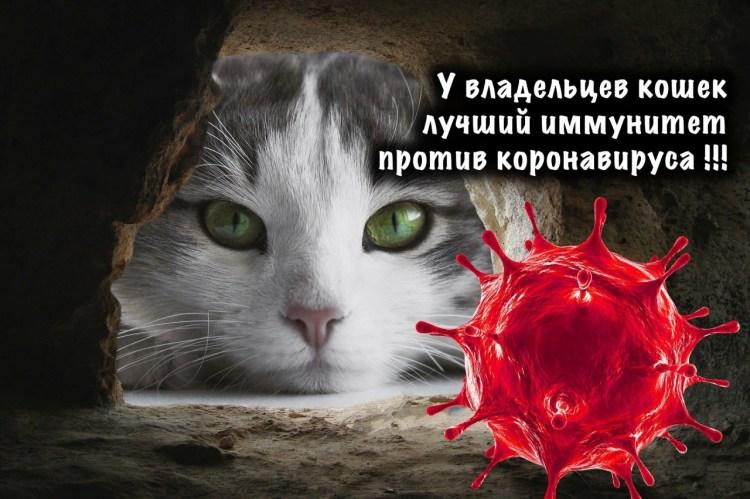 Благодаря домашним питомцам, иммунитет их владельцев лучше противостоит атаке COVID-19