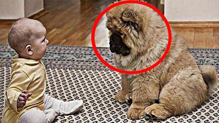 Родители поразились, когда узнали, для чего собака покусывает их парализованного сына