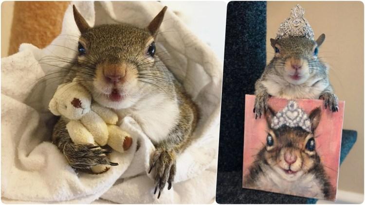 Люди спасли белку от страшного урагана и теперь она не может уснуть без своего плюшевого мишки
