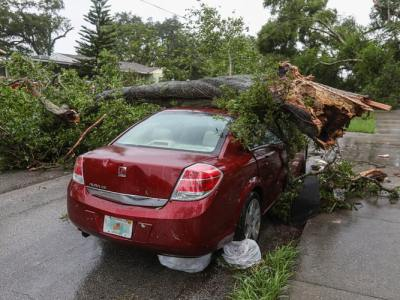 hurricane season fells tree on car