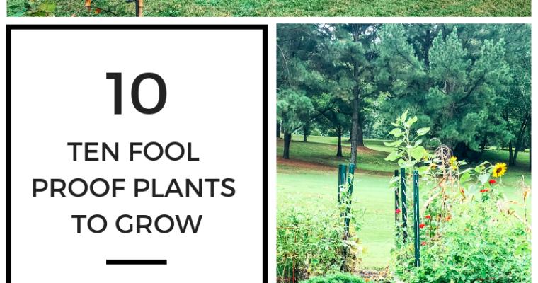 Top Ten | Easy Plants to Grow
