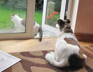 Penny and Cat at the open door