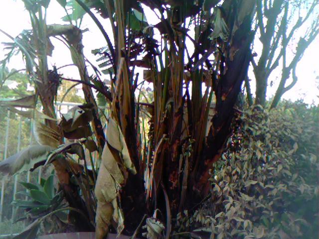 burned-palm-tree.jpg