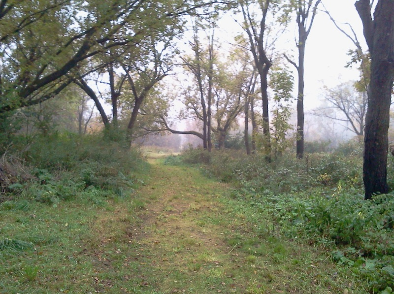 Looking down the lane toward the first meadow on a foggy day.