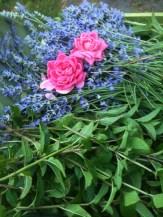 First summer harvest of herbs