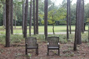 Two wooden chairs in woods