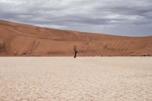 Dead tree in brown dry desert