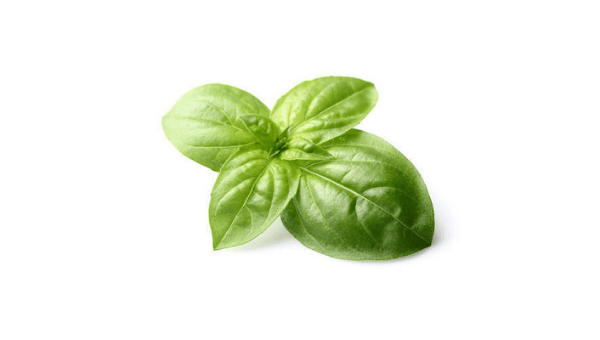 Basil Leaves - Home Remedies for Acidity