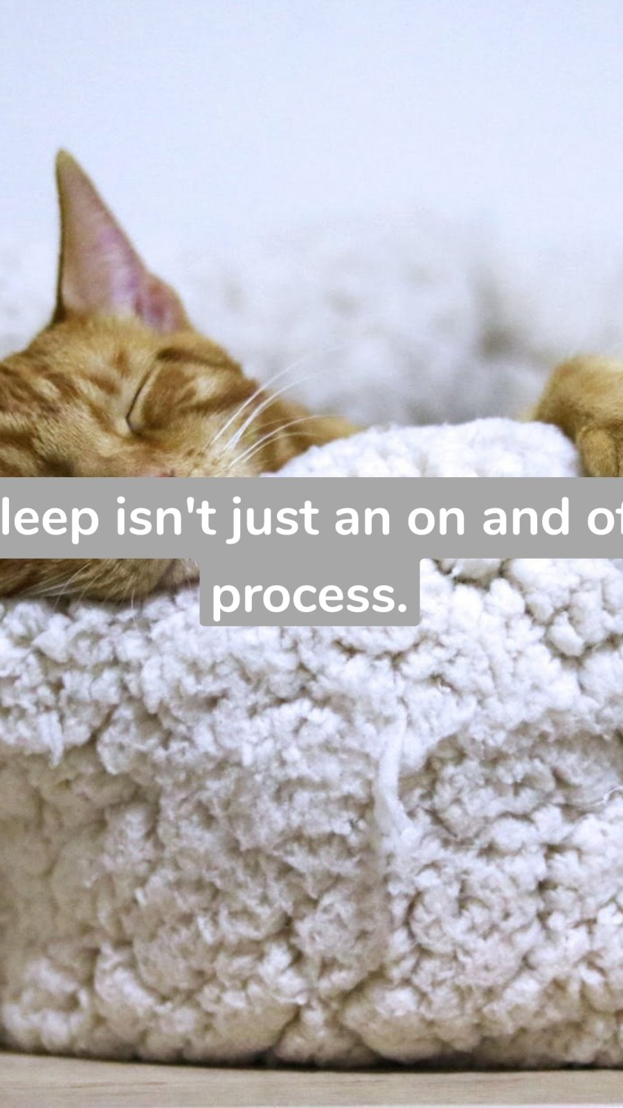 Sleep isn't just an on and off process.
