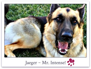 Jaeger_website_photo