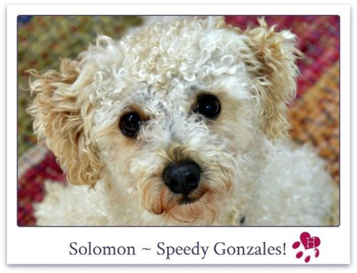 Solomon_website_photo