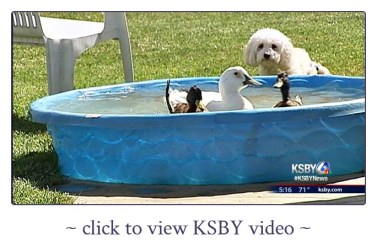 HHS_KSBY