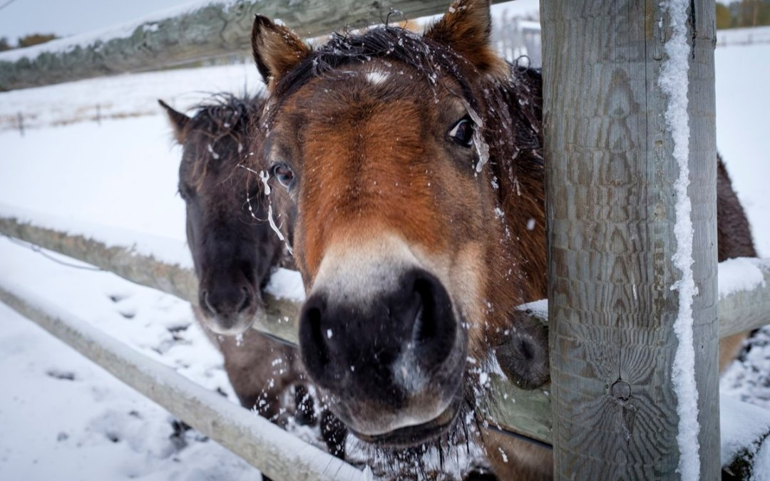 Keep your Equine Therapists, and Practice, Thriving in Winter Weather