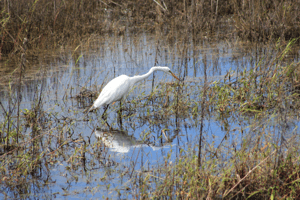 Myakka River State Park, Florida