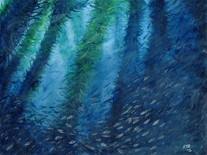 Jack Mackerel Amongst the Kelp painting