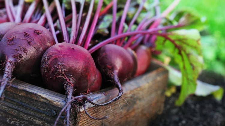 Red Beets, Dietary Nitrates, and Its Option for a Healthier Body