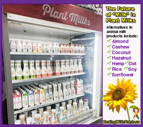 There are plenty of nut-free plant-based milk alternatives