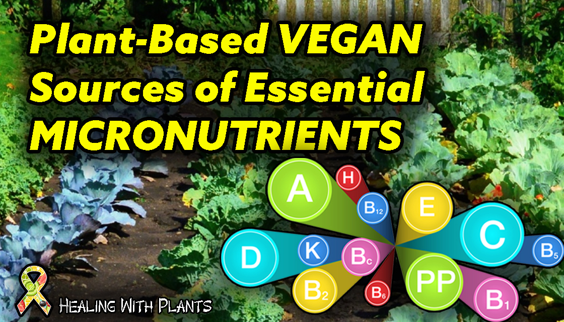 Plant Based Vegan Sources Of Vitamins And Minerals Healing With Plants
