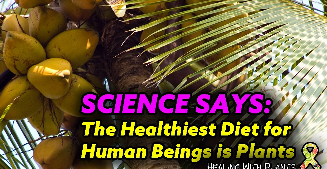 The Healthiest Diet for Human Beings Is Plants