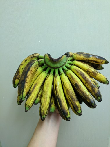 Nutritional benefits of bananas include that they are high in fiber.